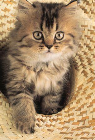 kitten looks in an objective Stock Photo