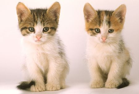 Two kittens look in an objective