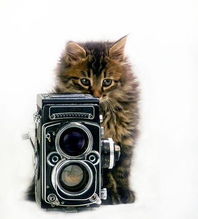 domestic kitten with  camera on  white background,  close up