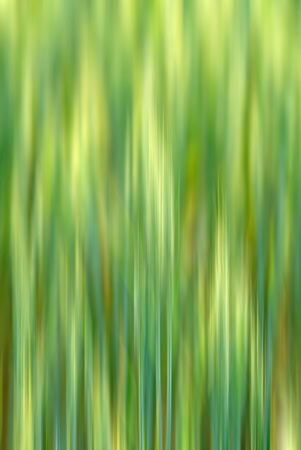 tonality: dynamical and symmetric composition in  green tonality Stock Photo