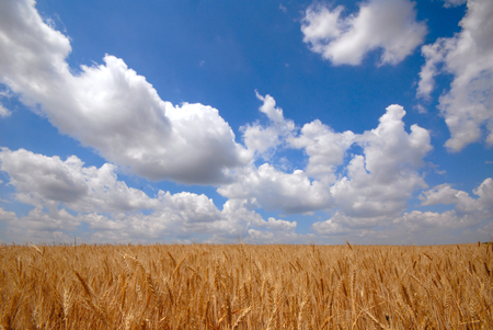 landscape  field and clouds photo