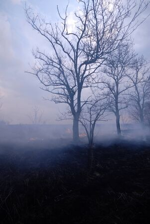 escaped: escaped trees after  fire Stock Photo