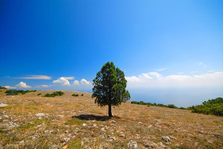 lonely green tree in mountains on  background of  blue sky Stock Photo - 1716747
