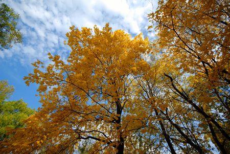 contryside: autumn motive, park, mellow autumn