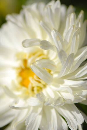 decorative flowers in  garden, autumn,  close up photo