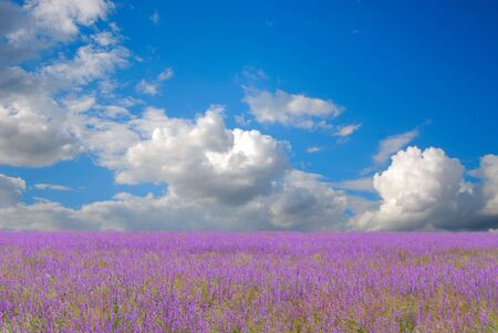 Blossoming field and the blue sky with white clouds Stock Photo - 3729253