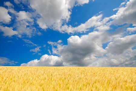 Blossoming field and the blue sky with white clouds Stock Photo - 3729227