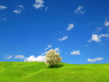 tree and green grass and the blue sky with white clouds Stock Photo - 3729265