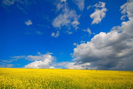 Blossoming field and the blue sky with white clouds Stock Photo - 3729259