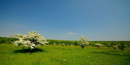 blossoming trees on  bachground of green garden, spring day Stock Photo - 3738718