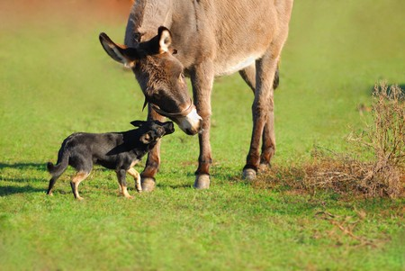 Friends  donkey and  dog on green background in an autumn sunny day Standard-Bild