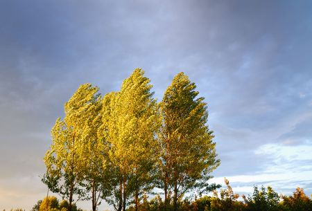 Foliage of three trees covered by beams of  coming sun on  background of  sky photo