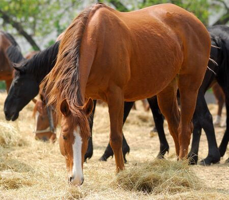 Horses of  English breed in shelter on  farm in solar, summer day photo