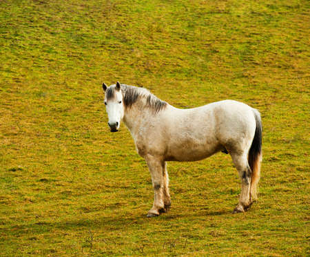 Pasture in mountains and a horse, spring day, a landscape photo