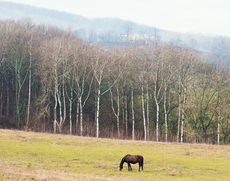 Horse on a spring pasture in mountain district, a sunny day photo