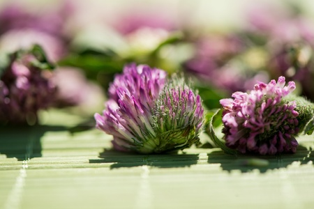 clover flower on an indistinct background in sonechny day photo