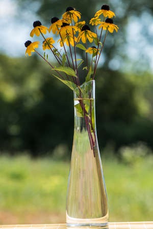 margaritas: decorative cultivated flowers in a vase in a sunny day on an indistinct background Stock Photo