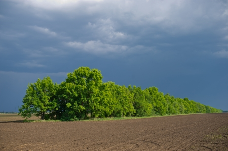 blooming green trees in the background plowed field photo