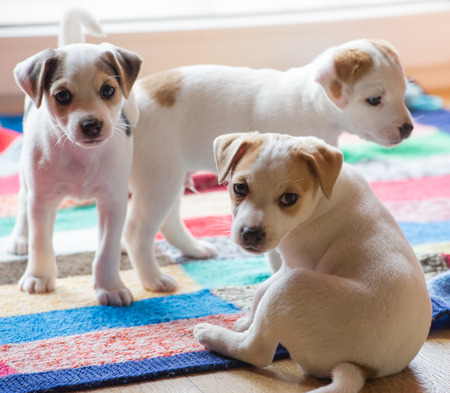 small puppys playing indoors