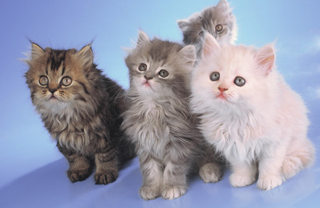 portrait of kittens photo