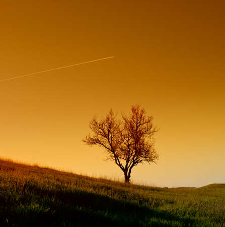 Single tree against the evening sky, landscape  Spring season  photo