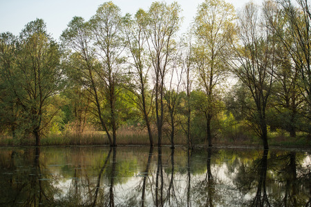 water spring: spring plants and trees surrounded by marsh water, spring season