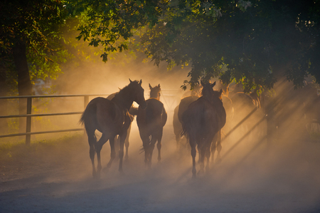 herd of horses back to the ranch pastures, summer season