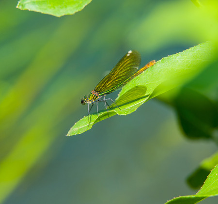dragonfly on green leaf plants on a sunny day photo