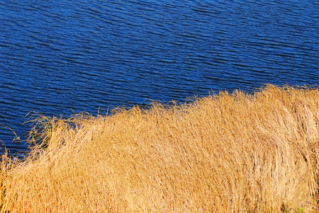 rural landscape, river and dry reeds on a sunny day, the\ autumn season