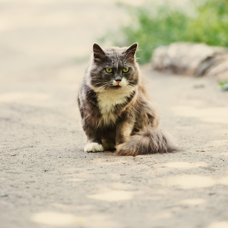 portrait of a cute domestic cat on a background of city park photo