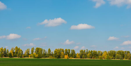 Green field and autumn wood on a background of blue sky with clouds photo