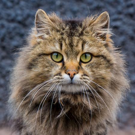 domestic cat on a city street photo