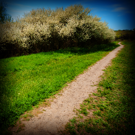 walking trail: walking trail in the park, spring season