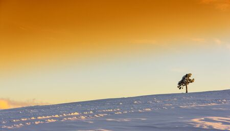 Landscape with a lone pine tree in the mountains at sunset, panorama photo
