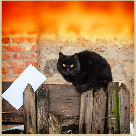 black cat on sitting on old wooden fence and a letter photo