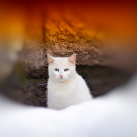 portrait of a cat on a city background photo