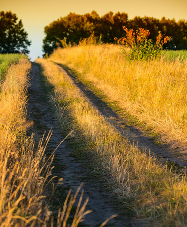 rural landscape, dirt road in the evening photo