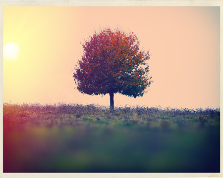 lonely tree: landscape sun and a lone tree in a field autumn season Stock Photo