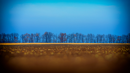 Autumn rural landscape, field after harvesting photo