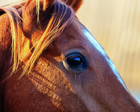 eye of a horse on blurred background closeup photo