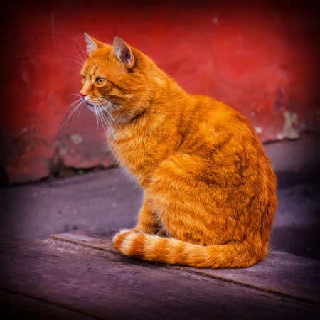 pet cat sitting on a city street photo
