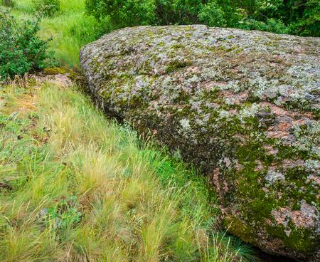 flowering plants: granite stones and flowering plants, spring landscape