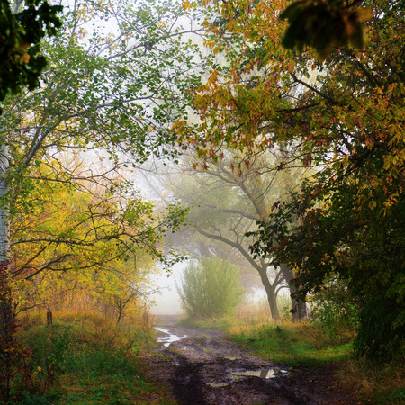 dirt background: Wet dirt road on a background of fog and forests Stock Photo