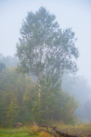 fenceline: landscape with tree and a wooden fence in the fog