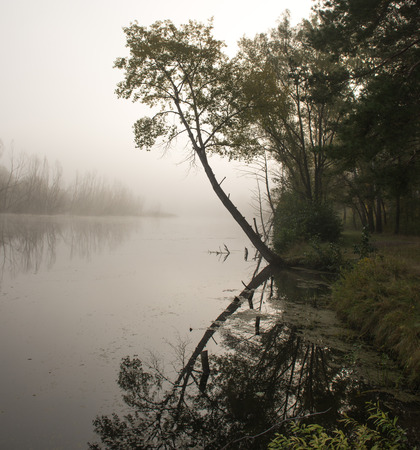 bent: tree bent over the water surface of the river Stock Photo