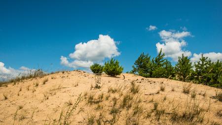 plants Sand dunes, sunny day