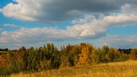 Landscape autumn trees and dry feather grass. Ukraine. Europe.