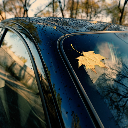 shiny car: Autumn yellow maple leaf lies on the windshield of the car