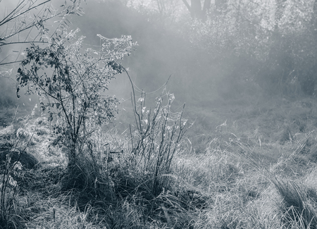 misty autumn morning in the village. Monochrome photo. Background for web design