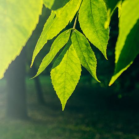 背景をぼかした写真緑の公園の緑の葉